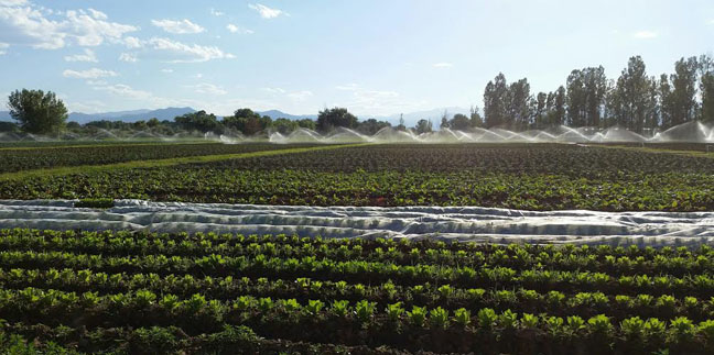 Isabelle Farm | Locally Owned, Organically Grown Lafayette