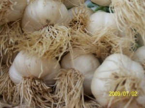 garlic_websmal